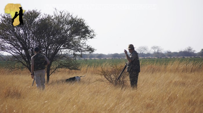 Wing shooting South Africa Limpopo guinefowl francolin