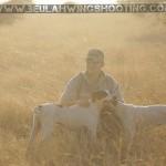 Train your dog, Dog training, pointer training, how to train my hunting dog