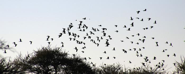 Waterfowl Wing shooting South Africa Beulah wingshooting